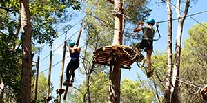 Large tree climbing trails Vaucluse